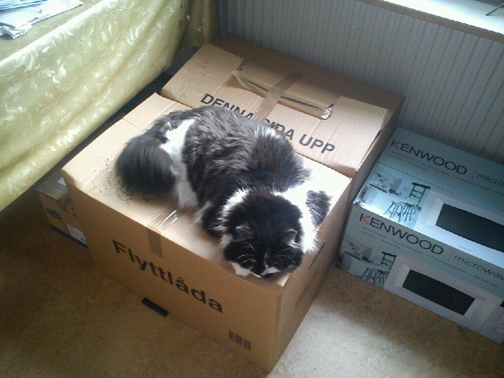 packat2