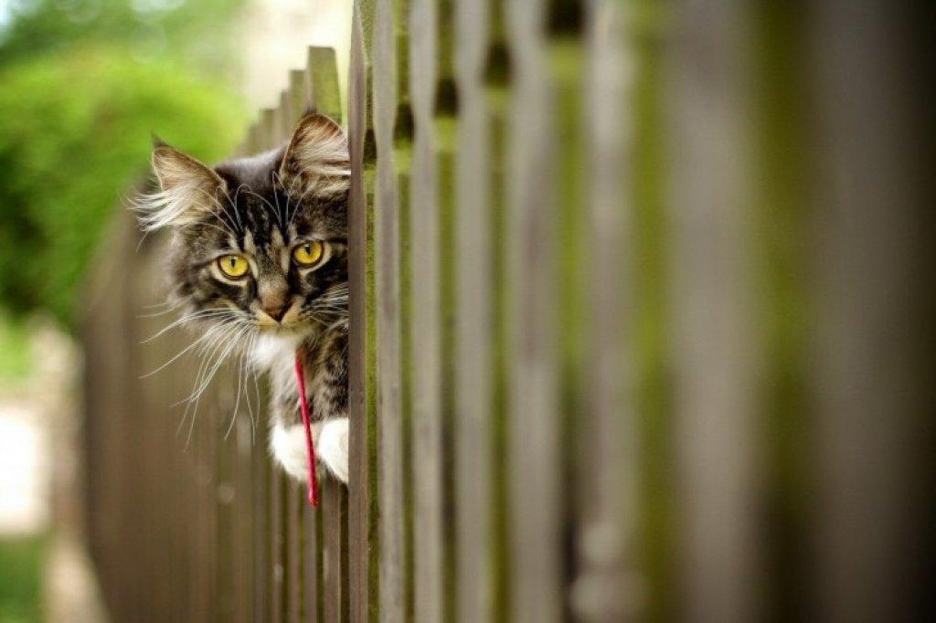 Cat-furry