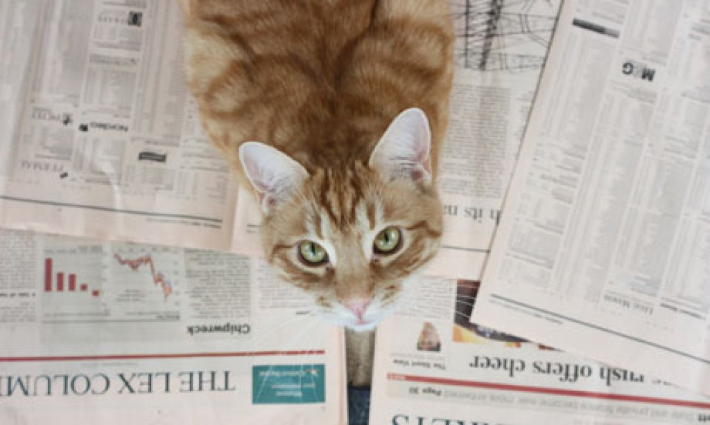 Jill Insley's cat Orlando chooses his winning stocks