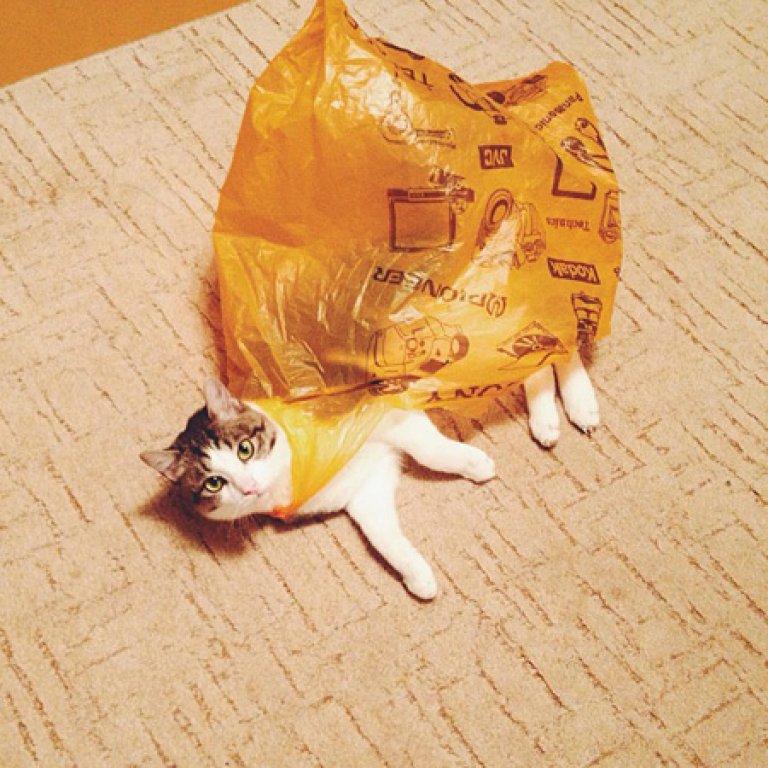 cat-in-plastic-bag