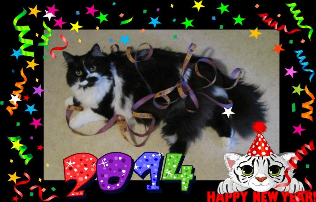Wikki nyår