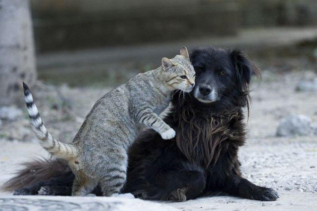 dog_cat_different
