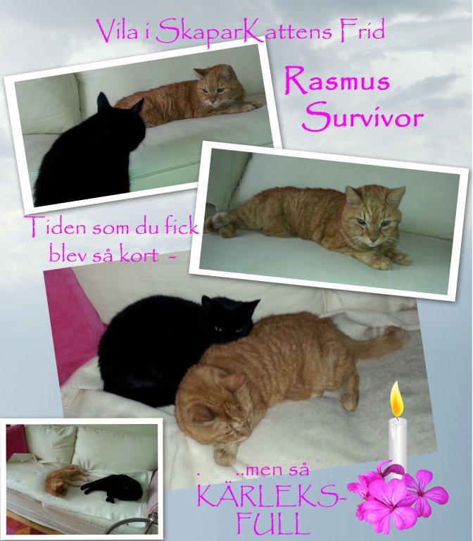 Rasmus the Survivor kopiera