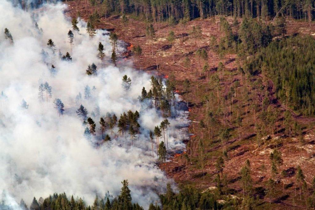 rorbo-20140803-den-skogsbrand