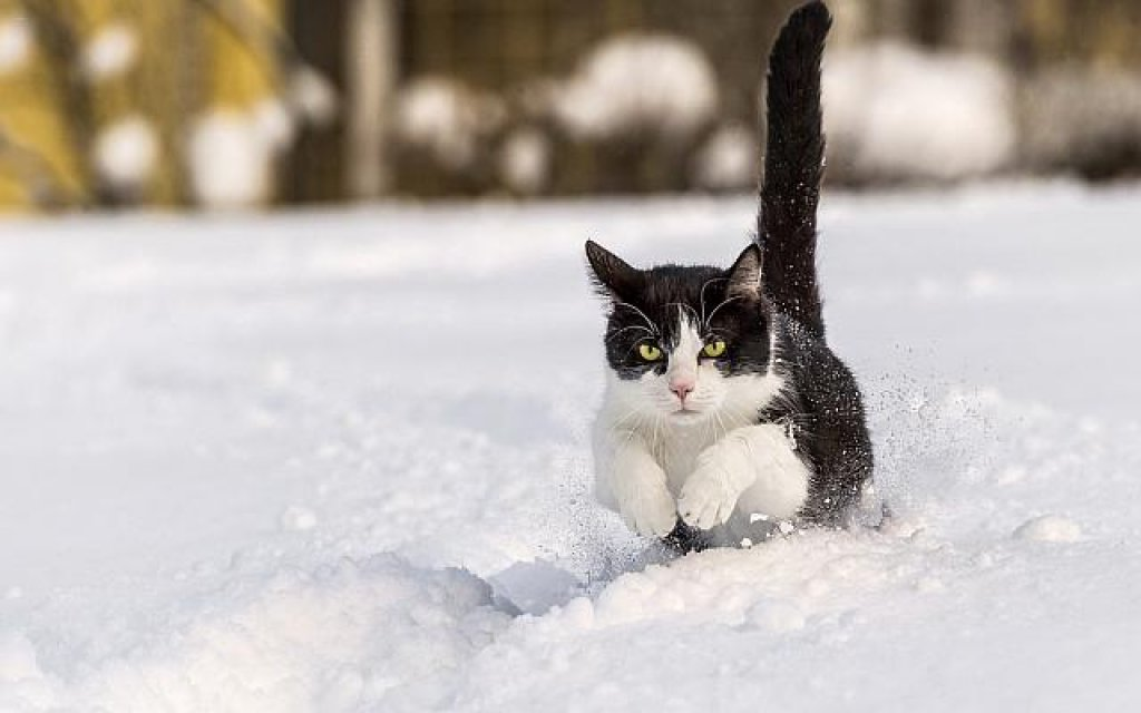 HD%20wallpapers%20about%20cute%20cats%20in%20the%20snow%201920x1200%20(16)