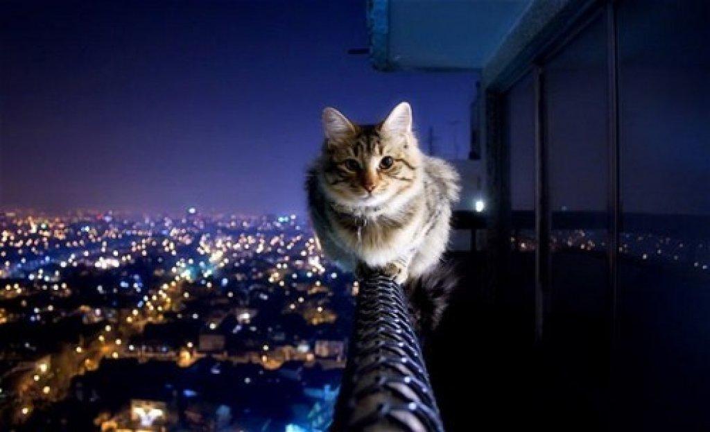 cooinda-cat-resort-cat-up-high