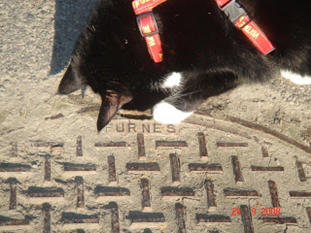 Sippo inspekterar brunnslock