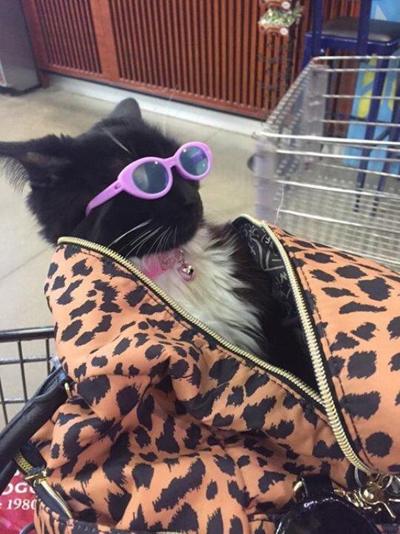 pimp cat