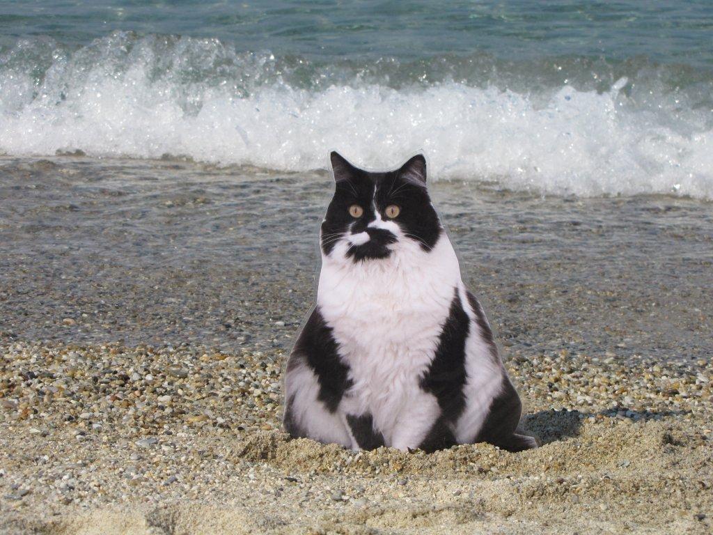 beachwikki