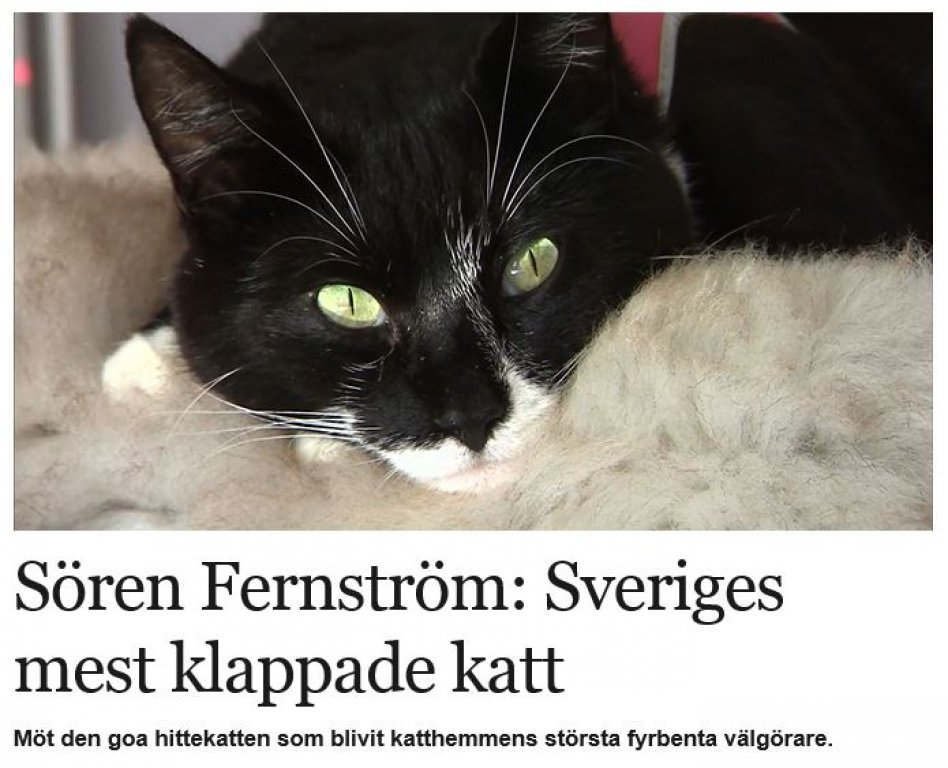 Vår vän Sören på TV också. Nästa gång tar vi med en FlatCat också?